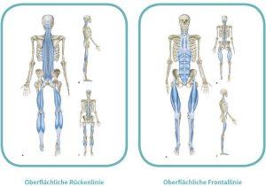 Oberflächliche myofasziale Leitbahnen - Rücken- und Frontallinie (Quelle: https://www.trainingsworld.com/sportmedizin/flossing-in-therapie-und-training-6512622)